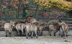 Tiergarten 191011-7 (Gottfried Gillich) Tags: tiergarten zoo nuernberg nuremberg franken frankonia bayern bavaria germany europe