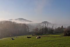 Ebersburg im Nebel (Uli He - Fotofee) Tags: ulrike ulrikehe uli ulihe hergerthergertnikonnikon d90fotofeerhönnebelnovember2019herbstplätzerpoppenhausenrund um poppenhausen