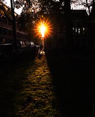Through the Sun-Day-Light #ThatInnerCityGlow (10-11-2019) by #MrOfColorsPhotography DillenvanderMolen MrofColors.com (mrofcolorsphotography) Tags: colorful colour colourful colours mrofcolorsphotography mrofcolorscom mrofcolors fall herfst thenetherlands holland streetphotography street streetphotographer streets photooftheday photographer photography photo photos photographers canonnederland canonphotography canon light day daytime daylight canoneosr cold colors nrofcolors morfcolorsphotography sunlight sun sunny sunshine city cityphotography cityphotographer thatinnercityglow afternoon inspiremedia inspiremediagroningen instagram instagood inspiremedgroningen portfoliofocolors portfolio portfolioofcolors dillenvandermolen dillen glow sunday