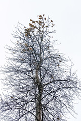 Left on Top (waledro) Tags: neckpointpark tree branches leaves