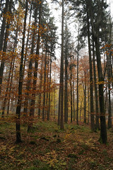 (BS-Foto) Tags: nx200 samsungnx200 samsung nx samsungnx nx1855mm samsungnx1855mmf35–56 kit wald foret forest bsfoto herbst automne autumn fall kitlens apsc 1855 1855mm iso400