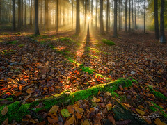 The First Light (Ellen van den Doel) Tags: autumn natuur landscape nature mist nederland outdoor licht bos herfst trees bomen landschap sunrays forest zonnenstralen bergenopzoom fog netherlands light november2019 fall noordbrabant