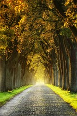 Golden days (=Я|Rod=) Tags: herbst fall autumn alley alleedesjahres2015 kirchlinteln oaks
