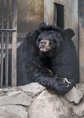 Khabarovsk Zoo (一 B_A_C 一) Tags: 伯力 哈巴羅夫斯克 俄羅斯 europe 歐洲 sony a73 a7iii a7m3 a7 taiwan 台灣 外拍 旅拍 travel 街拍 street streetphoto streetshot zoo 動物園