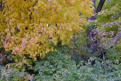 Autumn Forest Color Chaos (Modkuse) Tags: autumn autumnleaves fall fallcolors fallcolor nature natural natureart velvia fujivelvia fujifilmxt2velvia fujifilmxt2velviasimulation sooc straightoutofcamera nopostprocessing colorful colors art artphotography artistic artisticphotography photoart fineartphotography fineart fujifilm fujifilmxt2 xt2 fujinon fujinonxf1024mmf4rois