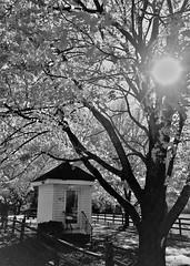 Garrison Forest driveway (karma (Karen)) Tags: garrisonforest owingsmills maryland driveways trees fences flares mono bw hss cmwd