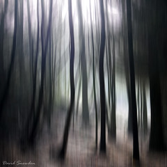 In Dark Trees (Dave Snowdon (Wipeout Dave)) Tags: davidsnowdonphotography canoneos80d woodland northyorkshire northyorkmoors hambleton icm trees winter