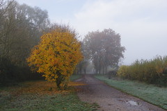 Autumn Colour (Derek Morgan Photos) Tags: dintonpastures hurst winnersh mist blackswanlake autumncolour