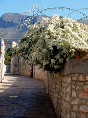 """""""All truly great thoughts are conceived while walking..."""" (fl_mala) Tags: areopoli manh discovergreece traveltogreece path voukamvillia flowers whiteandblue whiteflower ilovegreece greece greecelovers walking wonderfulworld travel"""
