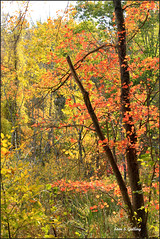 Autumn Foliage 2019 - 35 (Stan S. Gallery) Tags: fall fallcolors foliage woods autumn autumnal forest trees leaves october outdoors nature branches landscape canonrebel field