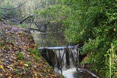 Oldpond Copse (Derek Morgan Photos) Tags: earley oldpondcopse waterfall