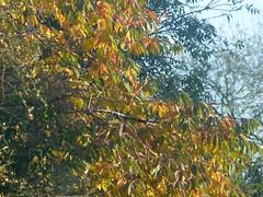 Sunny Side of the Hrdgerow (river crane sanctuary) Tags: trees hedge rivercranesanctuary nature