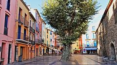 Collioure - Le quartier Mouré 5971 (franck.barré) Tags: collioure