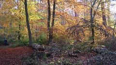 Forrest (co.schwarz) Tags: wald tree trees nature natur bäume baum november forrest sonne sun