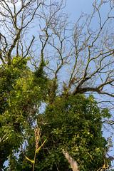 Tree (jillkearney1) Tags: green branches yellow tree countryside