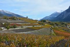 Salgesch (corinne emery) Tags: sentiercépages salgesch salquenen valais wallis mature landscape exterieur suisse paysage