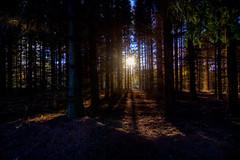 Lückenfüller (wolf238) Tags: sonne sun sol wald wood herbsttag bäume trees