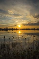 Photo of Sunset Reflection