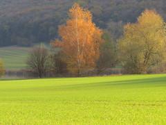 Herbstlandschaft (germancute) Tags: outdoor nature thuringia thüringen landscape l landschaft germany deutschland burg dreigleichen