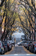 Down the Street II (matthew:D) Tags: trees beaconhill landscape fallcolors street nature car boston colors massachusetts unitedstates fall road person