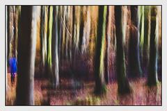 Autumn (1 of 1)-10 (ianmiddleton1) Tags: autumn autumnal fall woodland hss sliderssunday