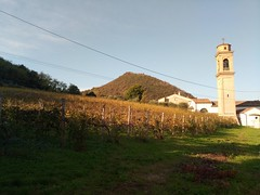 Vineyard over Luvigliano (Torreglia, IT)