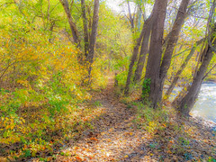 Journey (Shannonsong) Tags: fall river path autumn journey nature water trees fallcolors donjuan carloscastenada shadows leaves autumnleaves donjuanmatus