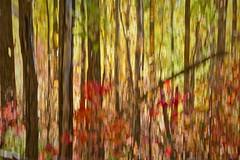 End of Season (ebergcanada) Tags: intentionalcameramovement icm fall autumn tree forest