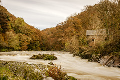 Cenarth Falls and the Teifi Vally. (dannie843) Tags: cenarthfalls teifivally river waterfall wales ceredigion forest trees autumn autumncolours