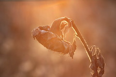 IMG_0217 (geraldtourniaire) Tags: bokeh sonnenuntergang herbst 6d eos6d 135l natur nature ef