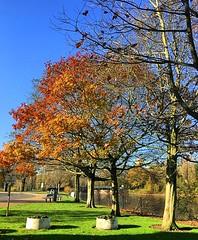 Walking in the park (BrooksieC) Tags: autumn gold yellow brown green blue sky trees grass park ireland northernireland belfast sydenham nature river lake pond