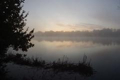 Mist over Black Swan Lake (Derek Morgan Photos) Tags: dintonpastures hurst winnersh mist blackswanlake