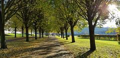 Kasterleepark Amsterdam (Ramon Boersbroek) Tags: kasterleepark amsterdam nieuwsloten autumn city park parc sunday sun trees season visit west capital view tram recreation green belgieplein neighborhood public transport suburb