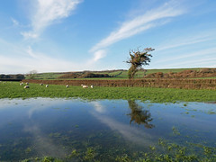 flooded fields (auroradawn61) Tags: abbotsbury dorset uk england november 2019 countryside lumixgx80