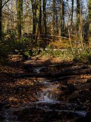 Photo of Castell Coch woodland stream