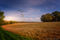 Approaching Winter (Peeblespair) Tags: skirwith autumn landscape farming peeblespairphotography raelawsonstudios birdsinflight
