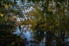 Maiden Erlegh Lake (Derek Morgan Photos) Tags: earley maidenerleghlake
