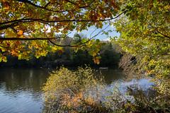 Maiden Erlegh Lake (Derek Morgan Photos) Tags: earley autumncolour maidenerleghlake