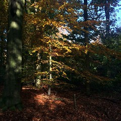 Herfstbos (Harry -[ The Travel ]- Marmot) Tags: