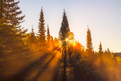 Poplar River Morning Mist (Tony Webster) Tags: lutsen minnesota minnesotaphotos mist poplarriver superiorhikingtrail tofte autumn fall forestphotos landscapephotos morning sun sunrise sunshine waterfall unitedstatesofamerica