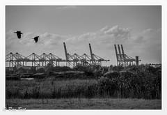 London Gateway (Raymond Best) Tags: docks port crans industry outside fields crows blackwhite