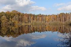 Herbst am Teufelssee (Sockenhummel) Tags: herbst teufelssee wald autumn fall see lake bäume trees herbstwald berlin spiegelung reflection wasser wolken sony rx100m4