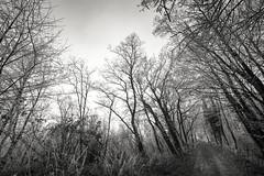 Balade (Jacques Isner) Tags: givre chemin ciel arbres froid pentax pentaxart pentaxflickraward pentaxk1 nature samyang14mm samyang jacquesisner flickrunitedaward