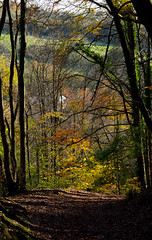 Photo of Castell Coch woodland