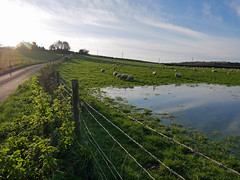Around Abbotsbury (auroradawn61) Tags: abbotsbury dorset uk england november 2019 countryside lumixgx80 flooded fields sheep