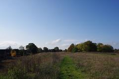 Autumn Colour (Derek Morgan Photos) Tags: earley autumncolour