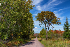 Upson Lake Road - Autumn in Northern Wisconsin (Tony Webster) Tags: northernwisconsin upsonlakeroad wisconsin autumn colors dirtroad fall fallcolors trees upson unitedstatesofamerica