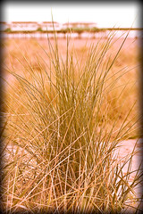 Grass (aidy14) Tags: beach fylde lancashire landscape pier sea seaside stannes