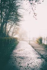 Cold as.... (HenrikHansen) Tags: path walk denmark jutland padborg nikon d610 autumn mist mood moody fog trees asphalt road curb hedge leaves
