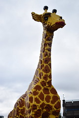 Giraffe from Lego (CoasterMadMatt) Tags: birmingham2019 birmingham brum city cities englishcities citiesinengland englandssecondcity brindleyplace legolanddiscoverycentrebirmingham legolanddiscoverycentre discoverycentrebirmingham legoland discovery centre legogiraffe giraffe lego legomodel legomodels model models birminghamattractions attractionsinbirmingham merlinentertainments westmidlands midlands englishmidlands england britain greatbritain gb unitedkigndom uk europe november2019 autumn2019 november autumn 2019 coastermadmattphotography coastermadmatt photos photographs photography nikond3500